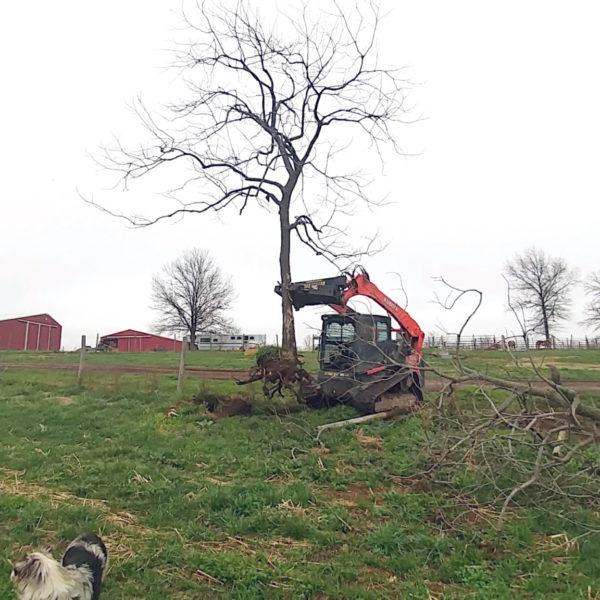 Tree Pull